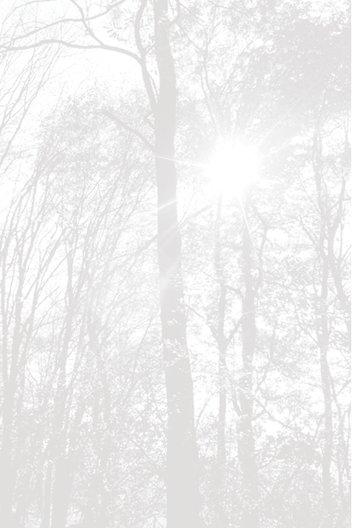 Ansicht 4 - Dankeskarte Wald