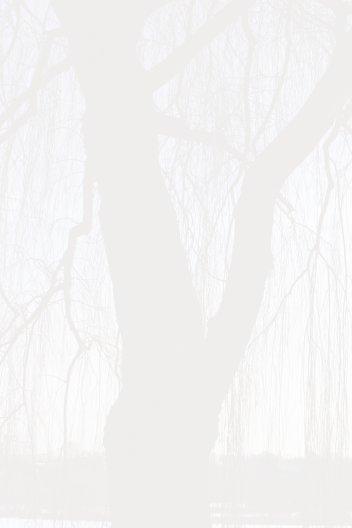 Ansicht 4 - Trauerkarte Baum
