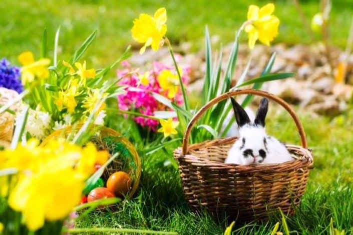 Ostergeschenke für Kinder: Kleine und große Überraschungen - Artikel öffnen